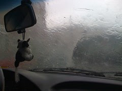 Vaca mirando a lluvia