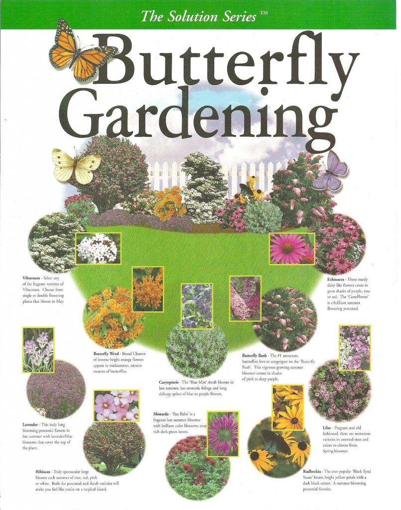 Create Your Own Butterfly Garden - PinLaVie.com