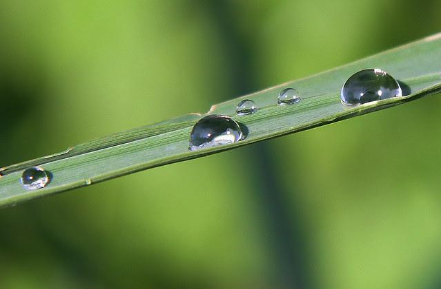 droplets2