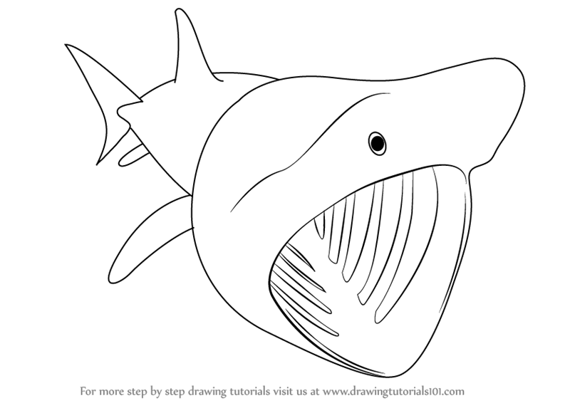 Learn How to Draw a Basking Shark (Fishes) Step by Step ...