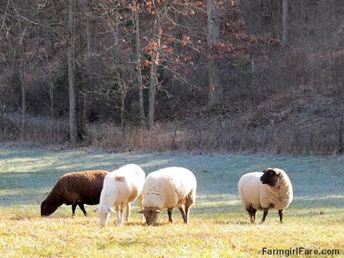 Slowly defrosting in the hayfield (5) - FarmgirlFare.com