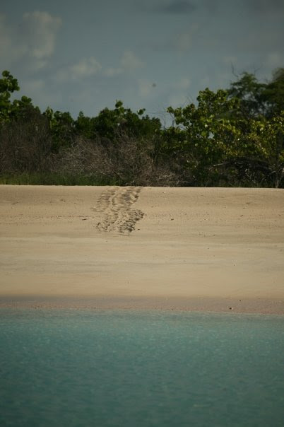 turtle tracks during nesting season