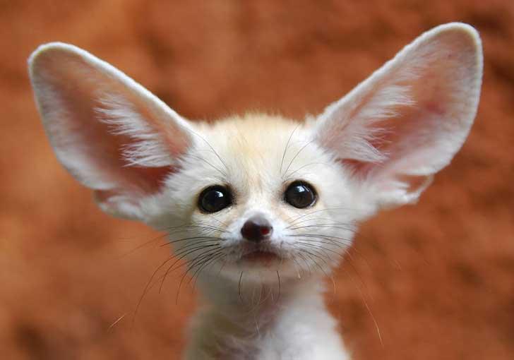 Resultado de imagen de animales pequeños y tiernos