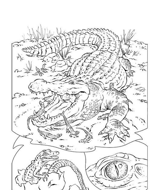 ausmalbilder kostenlos ausdrucken krokodil