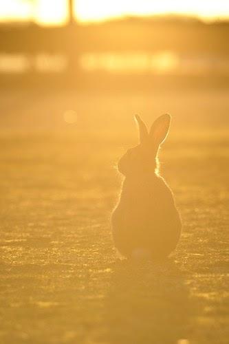 大久野島写真展「ヤセイノウサギ」2015 を開催します
