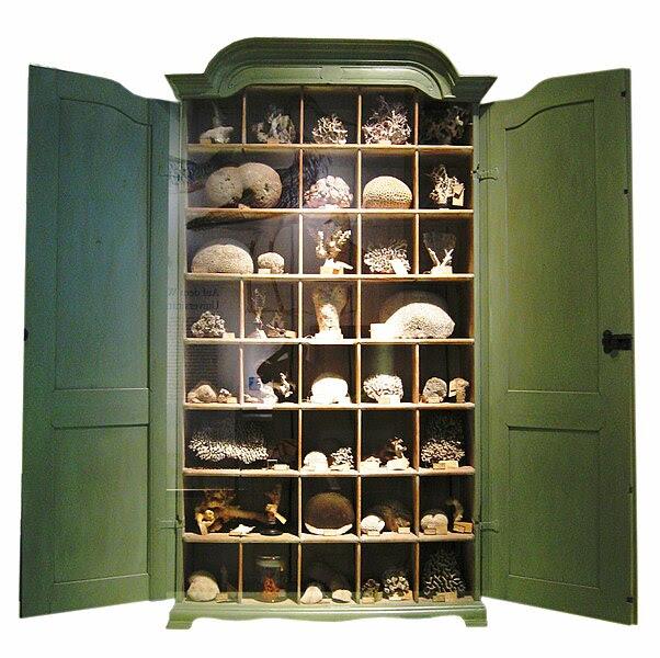 File:Berlin Naturkundemuseum Korallen.jpg