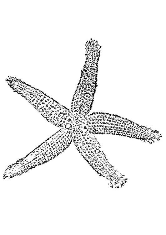Dibujo Para Colorear Estrella De Mar Img 28377