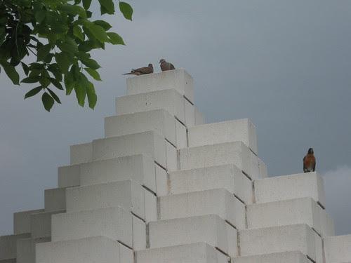 Mourning Doves Talking