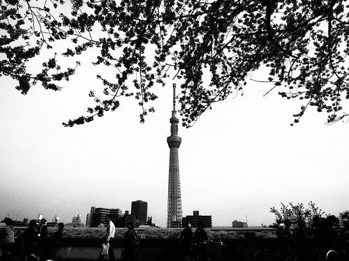 ラフモノクローム桜とスカイツリー