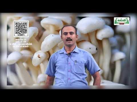 11th Botany பூஞ்சைகள் பாடம் 1 அலகு 1 பகுதி 5 Kalvi TV