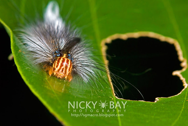 Caterpillar - DSC_7809