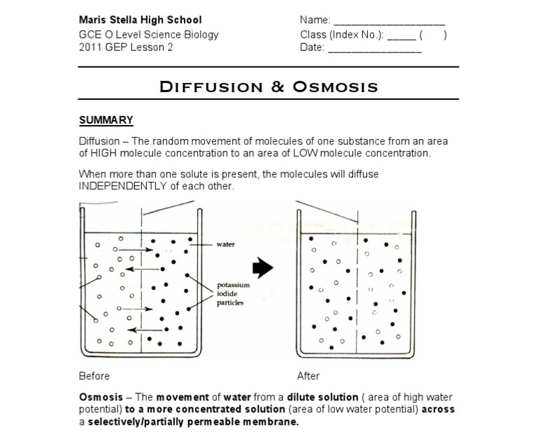 How to Teach Osmosis : 8 Steps (with Pictures) - Instructables