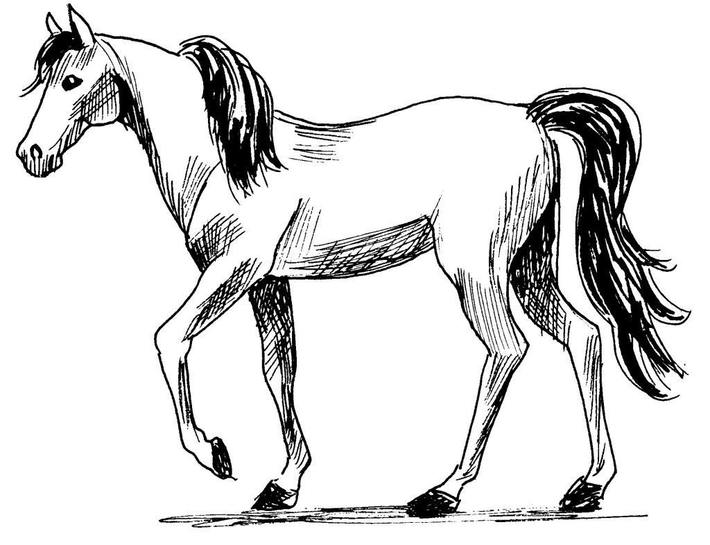 Dessin coloriage animal cheval au pas