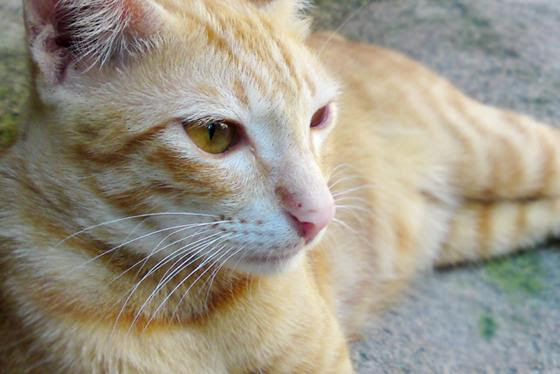 Bagaimana Isi Hatimu, Kucingku (Cara Kucing Berbicara)