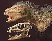 Il Pegomastax africanus