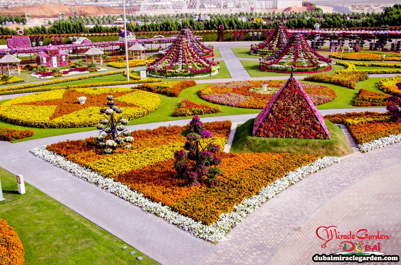 Dubai Miracle Garden 31