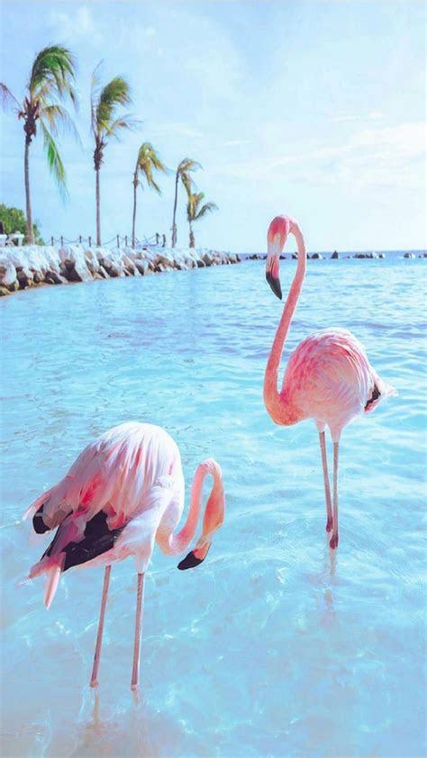 flamingo bird wallpapers wallpaper cave