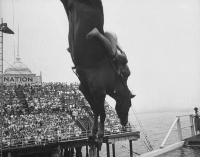 O show dos cavalos suicidas