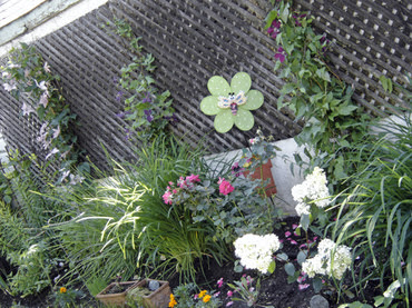 Back_yard_garden