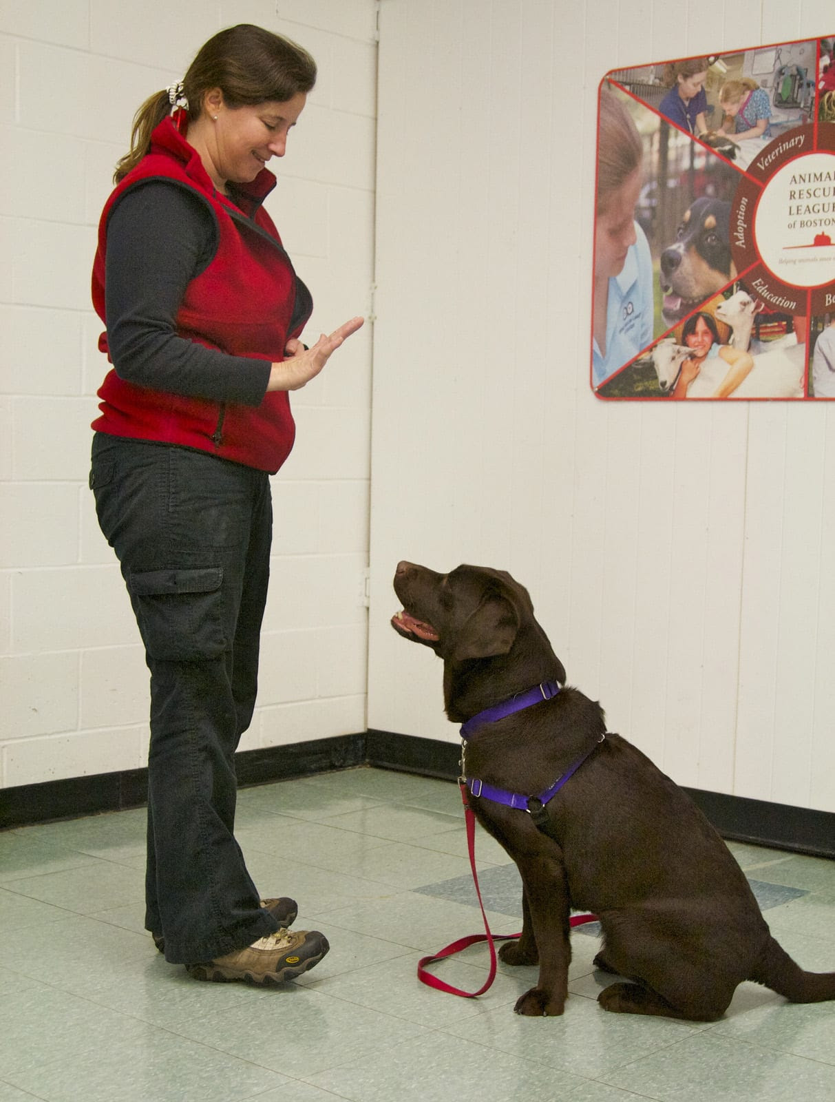 Best Puppy Training Classes Near Me In New Zealand