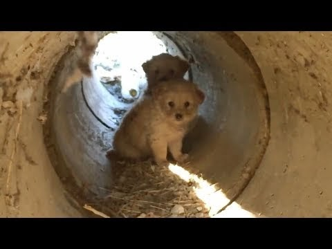 Viral : Scared Puppies Rescued from a Pipe