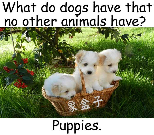 puppy puppies