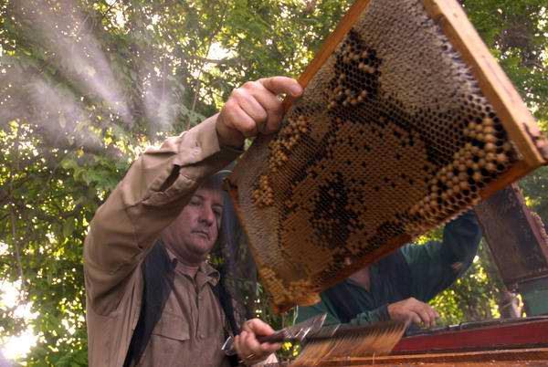 0910-apicultores-abeja-miel.jpg
