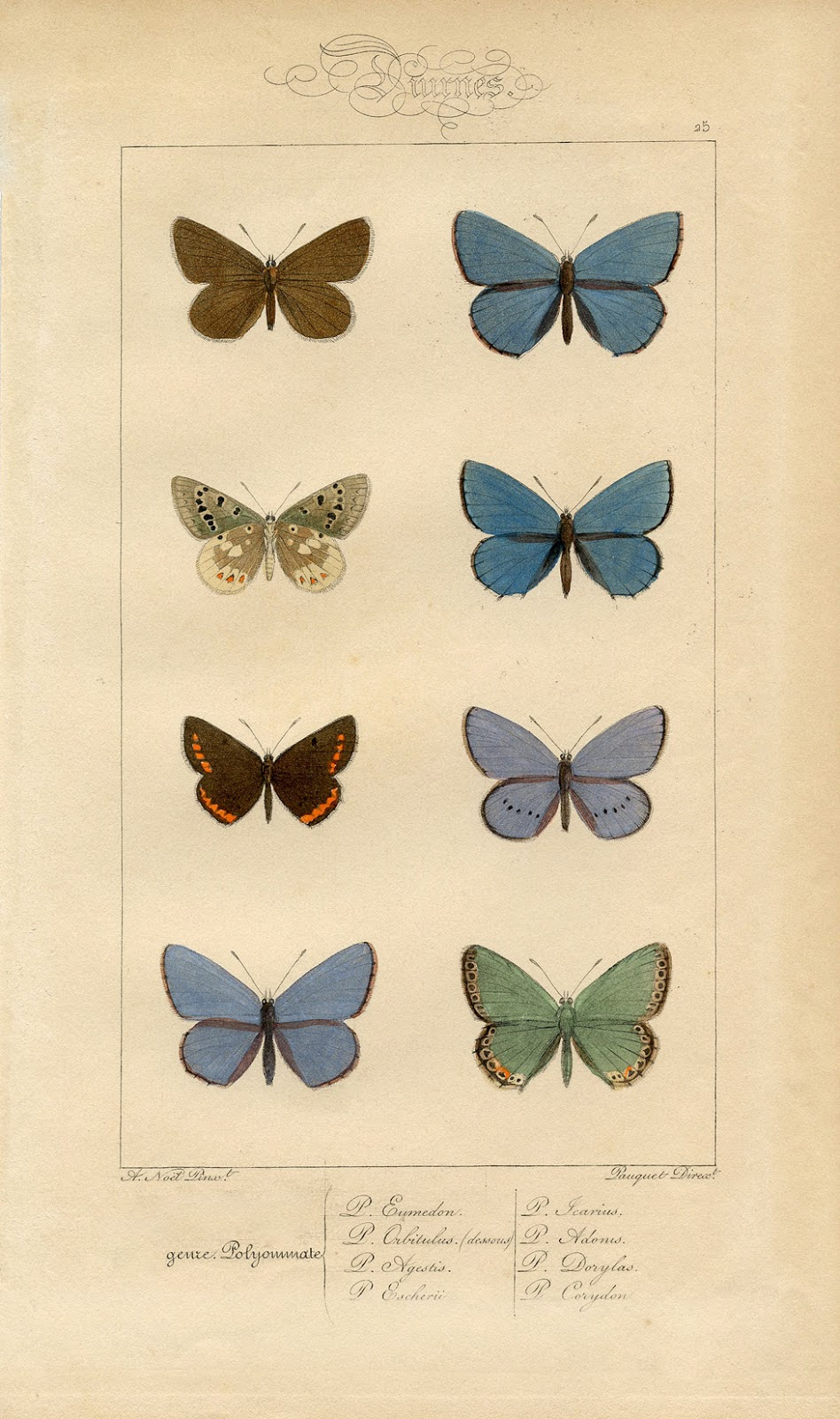 Butterfly Printable - Vintage Wall Decor - The Graphics Fairy