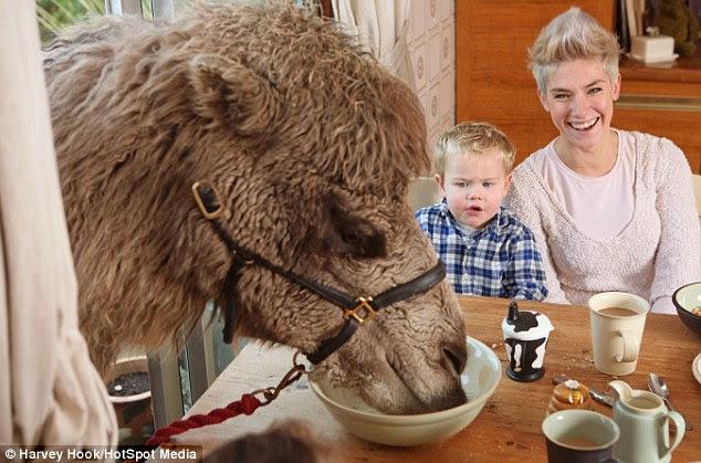 Οικογενεια εχει για... κατοικίδιο μια καμήλα