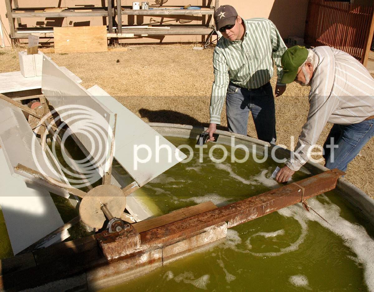 Algae Bio Diesel