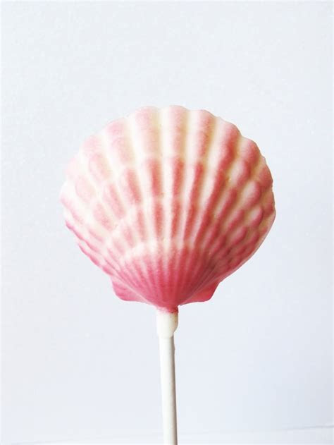 Raspberry Ombre pink seashell chocolate lollipop   Ocean
