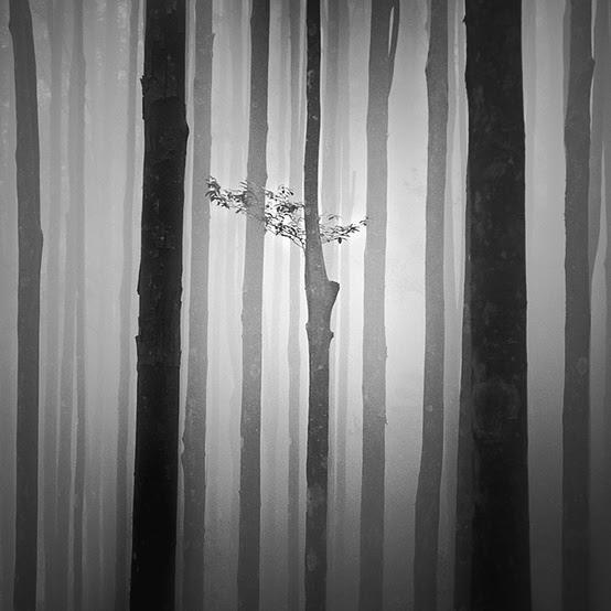 by Hengki Koentjoro via pinterest