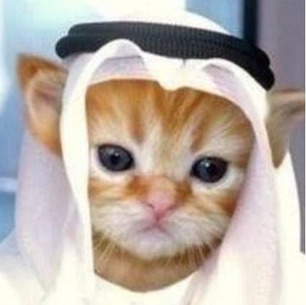 Risultati immagini per il gatto preferito di Maometto