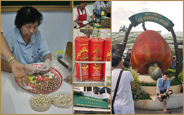 Phuket's famous cashew nut factory, run by Chinese Thai