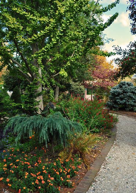 Adams Garden (6)