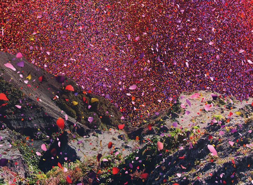 nick-meek-photographs-flower-petals-in-HD-designboom-07