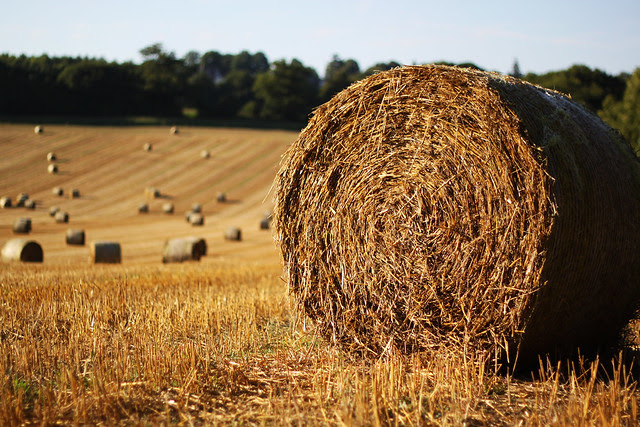 Project 52. Week 32 - Hay Bales