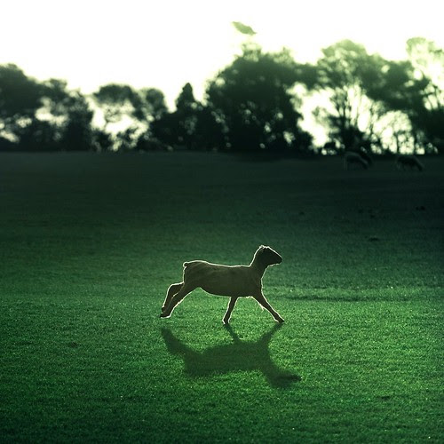 Backlight sheep shadow landscape por Cuba Gallery