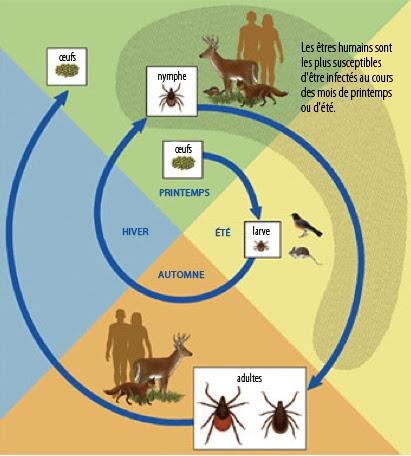 maladie de Lyme datant Invercargill sites de rencontre