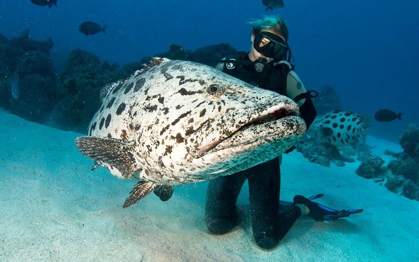 Parakseno.gr : coral 6 Ο μαγικός κόσμος του μεγάλου κοραλλιογενούς υφάλου