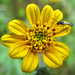 13-yellow-flower-IMG_6034