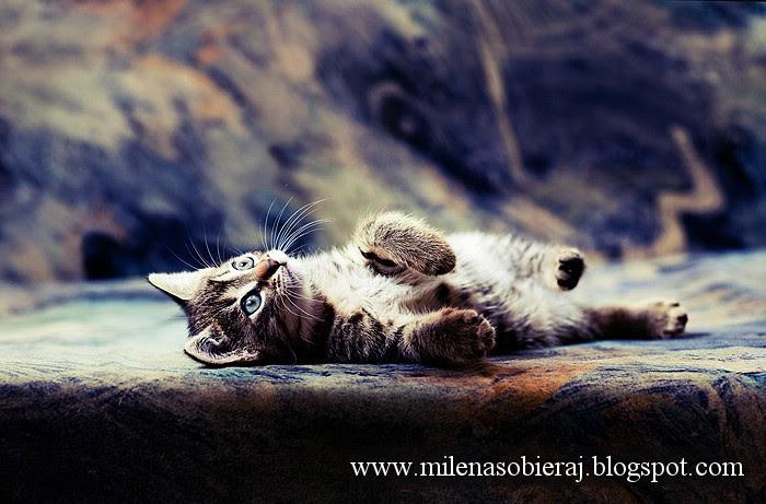 kittenSM