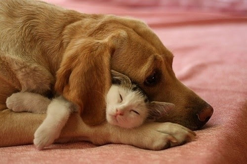 Awn-aww-cute-dogampcat-friends-favim.com-194885_large