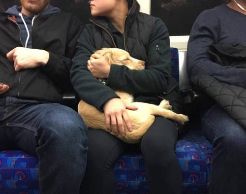 "awwww-cute: "" Hush little baby, don't say a word. Found them in a train in London (Source: http://ift.tt/2fvVbvs) """