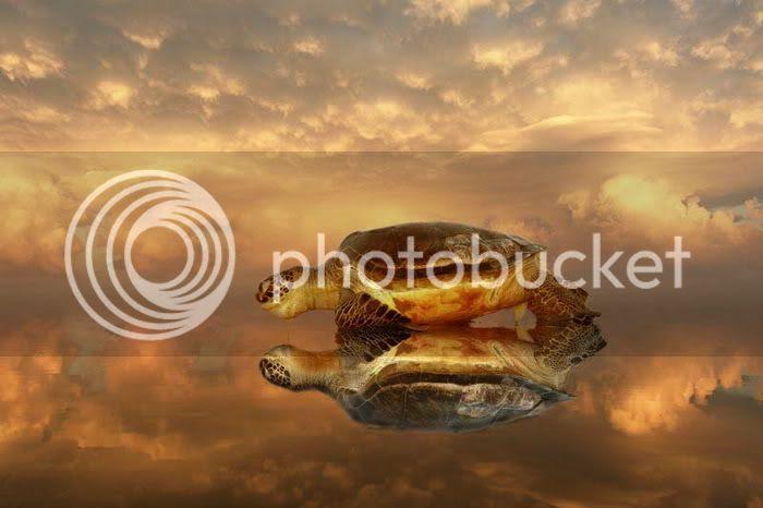 Ocean Turtle Photos