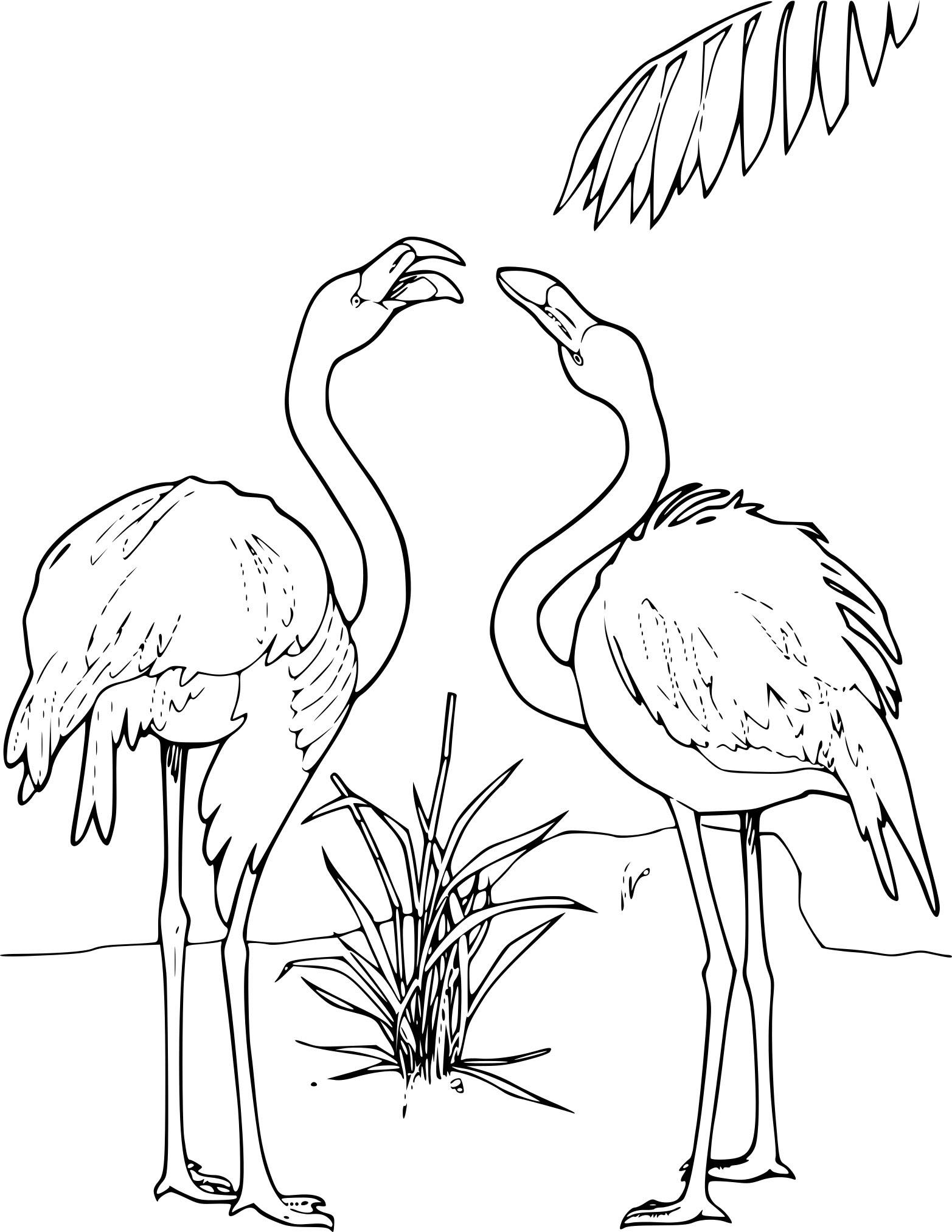 Coloriage Flamant Rose Coloriage Ideas
