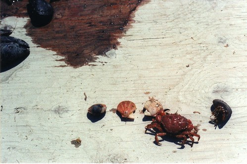 cool things from the sea
