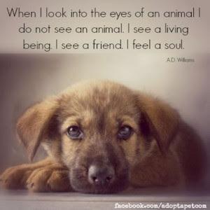 Animal Inspirational Quotes. QuotesGram