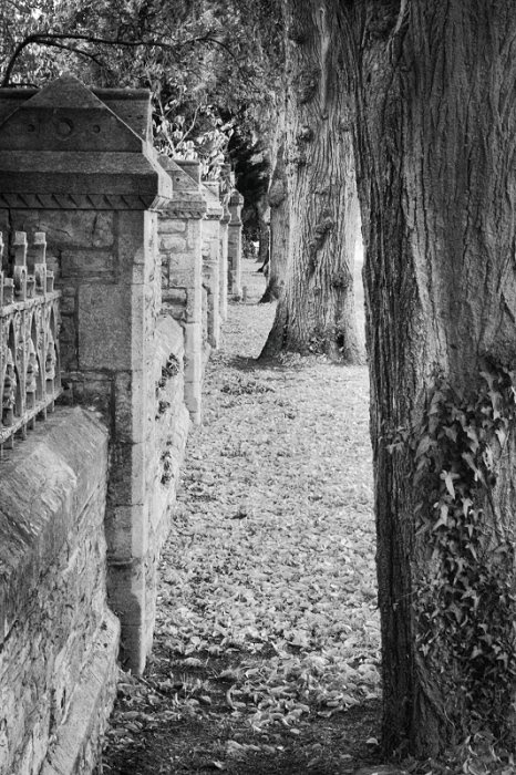 Cemetery Wall and trees