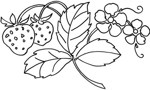 Dibujo De Flor De La Fresa Para Colorear Dibujos Para Colorear
